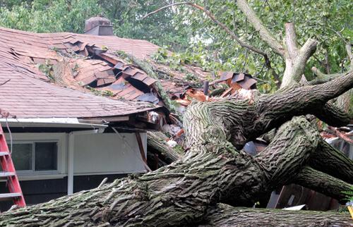 Fakivágás - kidőlt fa